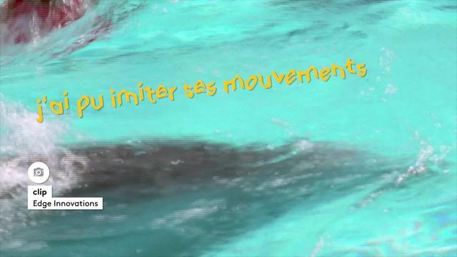 6media-un-robot-pour-delphinariums-roma