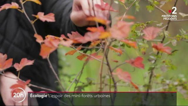 Ecologie : les prouesses des micro-forêts urbaines