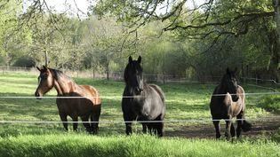 Un commerçant a lâché ses chevaux dans une banque deLuxeuil-les-Bains (Haute-Saône). (DENIS DEBADIER / PHOTONONSTOP / AFP)
