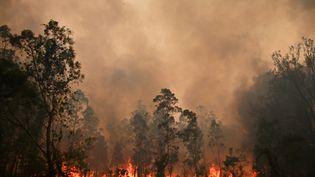 Un feu de forêt àBobin, à 350 kilomètres au nord de Sydney (Australie), le 9 novembre 2019. (PETER PARKS / AFP)