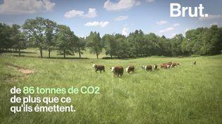 VIDEO. En Charente, ils créent une ferme respectueuse des animaux et des écosystèmes (BRUT)