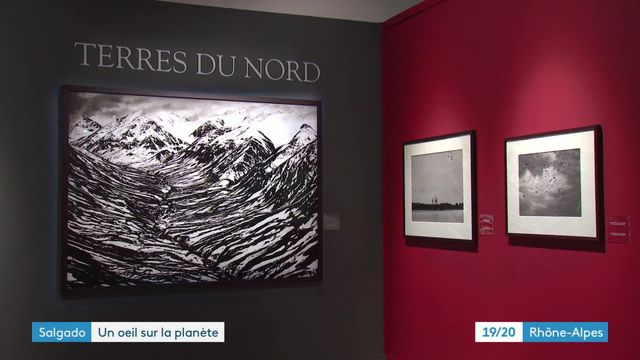 """Genesis"" : l'exposition de Sebastiao Salgado à Lyon"