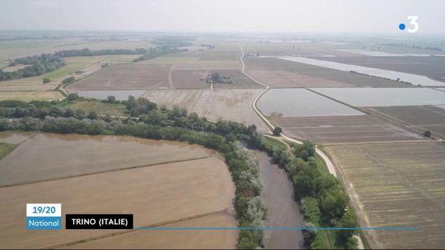 Italie : le bois de Trino, forêt ancestrale au milieu des rizières