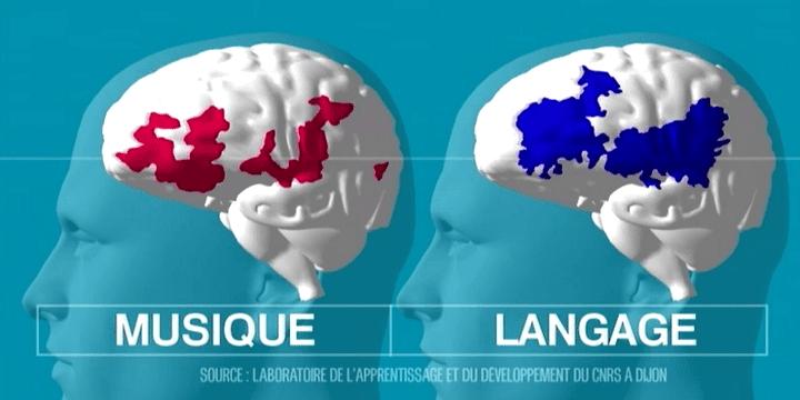 La musique stimule les mêmes zones du cerveau que le langage  (Culturebox)