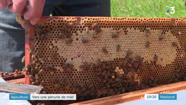 Abeilles : la production de miel très impactée