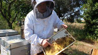 L'apiculteur Vincent Girod ouvre une ruche, à Lattes, près de Montpellier (Hérault), le 11 juillet 2015. (MARIE-ADELAIDE SCIGACZ / FRANCETV INFO)