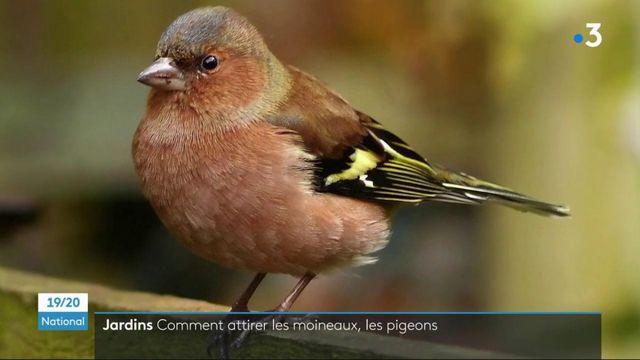 Oiseaux : des nichoirs dans les jardins des particuliers pour sauver des espèces menacées
