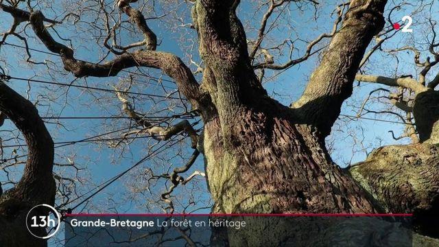 Mythes et légendes : la mystérieuse forêt de Sherwood