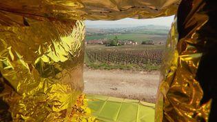14 oeuvres d'art contemporain exposées dans les vignes de Champagne jusqu'au 15 septembre 2021. (CAPTURE D'ÉCRAN FRANCE 3 / P-A. BOUDET)