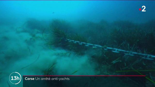 Corse : l'île veut interdire les yachts géants pour préserver la biodiversité