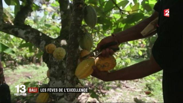 Feuilleton : le chocolat, pépite française (4/5)