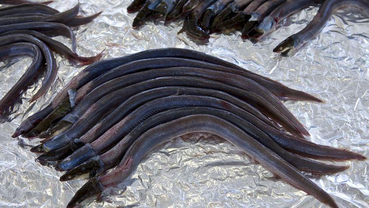 Des anguilles en vente sur un marché à Bordeaux (Gironde), le 2 octobre 2010. (TIM GRAHAM / ROBERT HARDING HERITAGE)