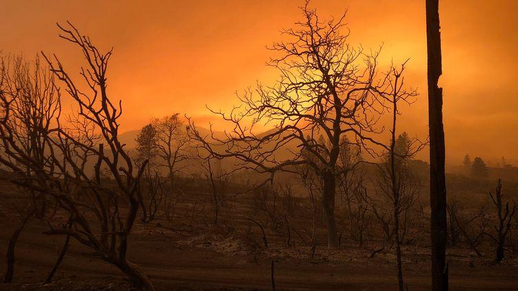 La végétation est noircie et dévastée après le passage d'un icendie près de Keswick en Californie, le 27 juillet 2018. (ALEXANDRIA SAGE / REUTERS)