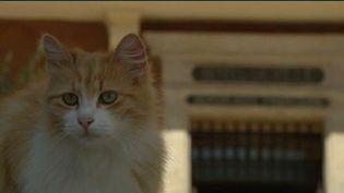 Le maire de Cotignac (Var) ne veut plus des chats errants dans son village et serait prêt à faire appel à la fourrière. (FRANCE 3 PROVENCE-ALPES / FRANCETV INFO)