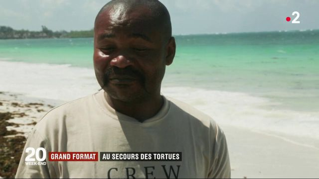 Kenya : au secours de tortues