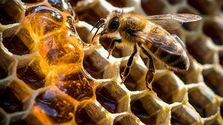 Pour l'apiculteur, le préjudice se chiffre à 7600 euros. (SASCHA STEINBACH / EPA)