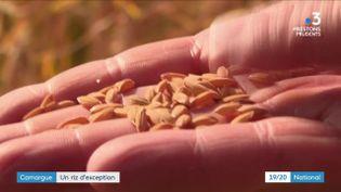 La Camargue est la seule région de production de riz en France. Mais face à la concurrence étrangère, son activité est en danger. Son arrêt serait pourtant une catastrophe écologique. (France 3)