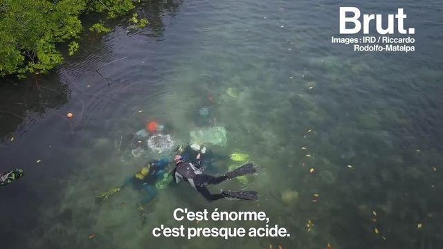 La résilience des coraux face au changement climatique. C'est ce qu'étudient ces scientifiques en Nouvelle-Calédonie. Et ils ont peut-être une solution pour repeupler les récifs…
