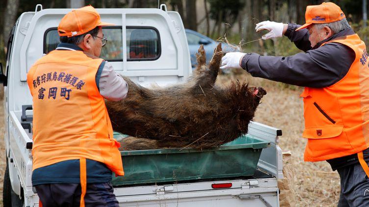 Des chasseurs emportent le cadavre d'un sanglier sauvage, à Tamioka, dans la région de Fukushima, le 2 mars 2017. (TORU HANAI / REUTERS)