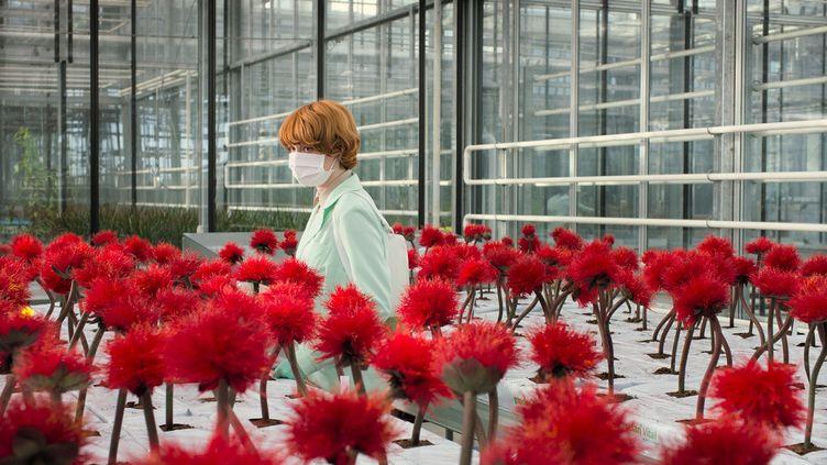L'actrice britanniqueEmily Beecham dans Little Joe de la réalistrice autrichienneJessica Hausner. (Copyright The Coproduction Office)