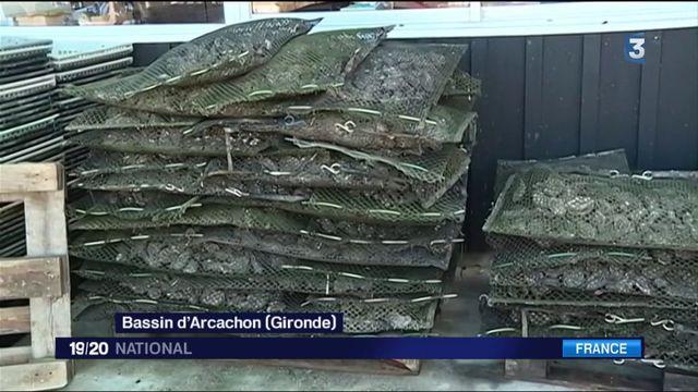 Bassin d'Arcachon : un vol inédit de 7 tonnes d'huîtres