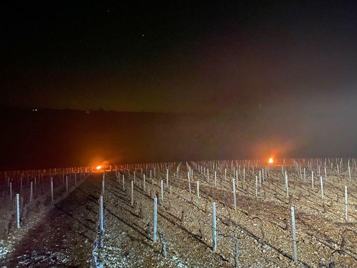 Le feu allumé dans les vignes pour les protéger du gel. (BORIS LOUMAGNE / RADIO FRANCE)
