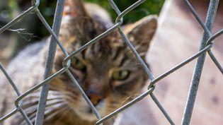 Un chat dans un refuge pour animaux àDorf Mecklenburg, en Allemagne, le 3 juin 2016. (Photo d'illustration) (JENS BUTTNER / AFP)