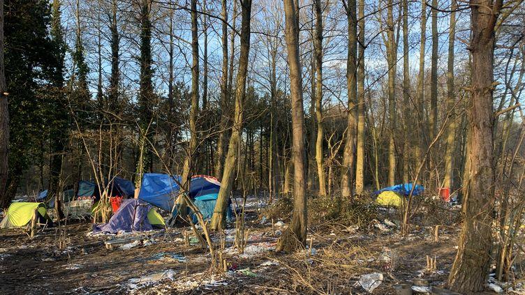 Des tentesinstallées dans le bois de Grande-Synthe (Nord), le 9 février 2021. (MATHILDE VINCENEUX / RADIO FRANCE)