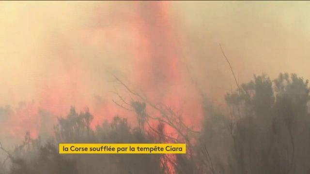 Corse : avec le départ de la tempête Ciara, la fin des incendies se rapproche