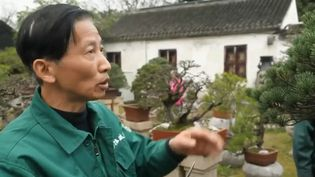 Dans les jardins traditionnels chinois. (FRANCE 2)