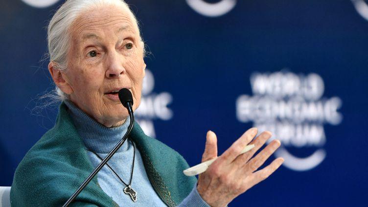 Jane Goodall éthologue et anthropologue britannique. (FABRICE COFFRINI / AFP)