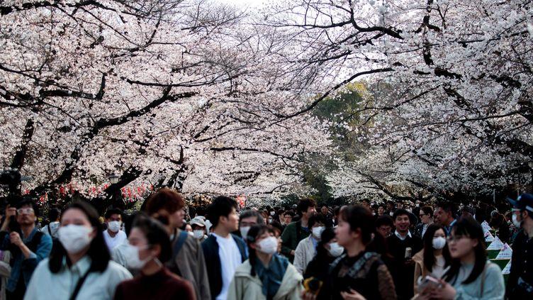 Des promeneurs du parc de Ueno à Tokyo (Japon), lors de la floraison des cerisiers, le 22 mars 2020. (BEHROUZ MEHRI / AFP)