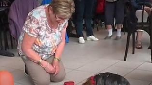 Le Toutourisme, une activité qui favorise l'accueil des animaux de compagnie. (CAPTURE D'ÉCRAN FRANCE 3)