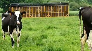 """""""Fermes en scène"""", spectacles à la ferme jusqu'au 7 septembre  (Culturebox)"""