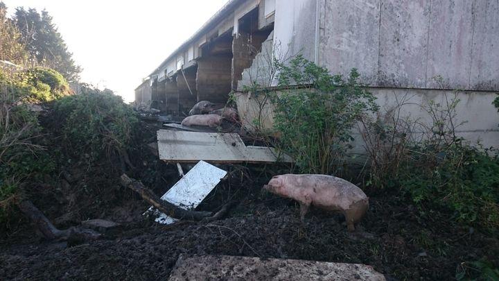 En 2017, la rupture du mur d'une porcherie, près de Pédernec (Côtes-d'Armor), avait provoqué une pollution au lisier du Jaudy. (MAXPPP)