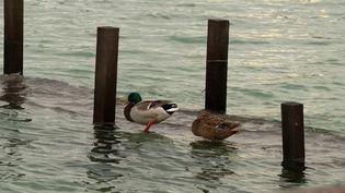 Le lac d'Annecy dépasse de 22 centimètres son niveau habituel en ce début de février 2021. (FRANCEINFO)