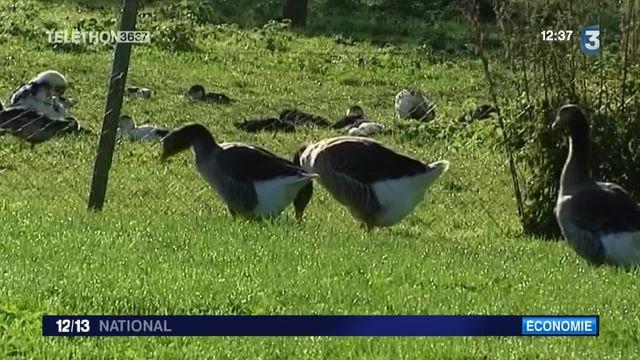 Grippe aviaire : des pays suspendent l'importation de produits français