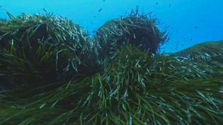 Corse : l'île veut interdire les yachts géants pour préserver la biodiversité (France 2)