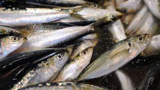 Illustration. Depuis dix ans les sardines et les anchois diminuer dans les golfes du Lion et de Gascogne rétrécissent. (FRED TANNEAU / AFP)