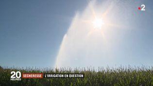 Les agriculteurs irriguent-ils trop leurs cultures ? (FRANCE 2)