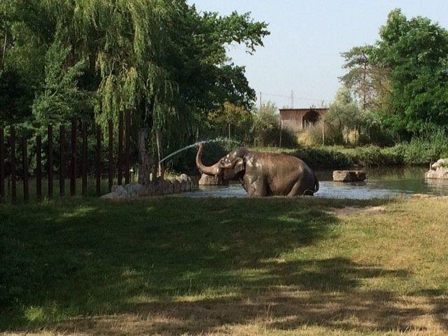 Les animaux du zoo le Pal tentent de se rafraîchir comme ils peuvent. (ARIANE GRIESSEL / RADIO FRANCE)