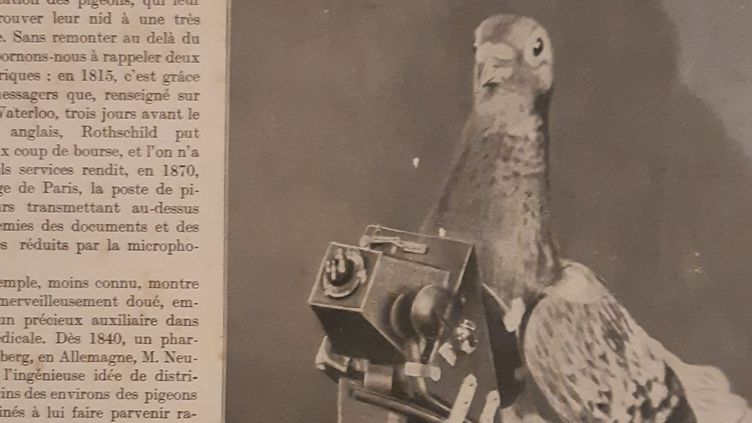 Pigeon voyageur, équipé d'un appareil photo par l'armée française pendant la première guerre mondiale. Article du magazine l'Illustration, conservé au Musée de la colombophilie militaire du Mont Valérien, près de Paris. (Franck Cognard / franceinfo)