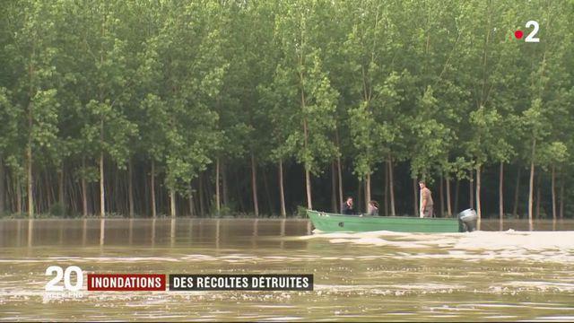 Inondations : des récoltes détruites