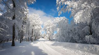 Les Vosges sous la neige (PHILIPPE SAINTE-LAUDY / GETTY IMAGES)