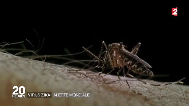 Zika : la propagation du virus inquiète