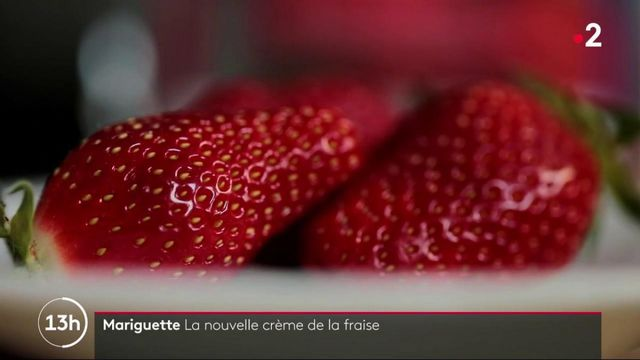 la fraise mariguette obtient son label rouge
