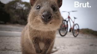 L'animal le plus heureux du monde (BRUT)