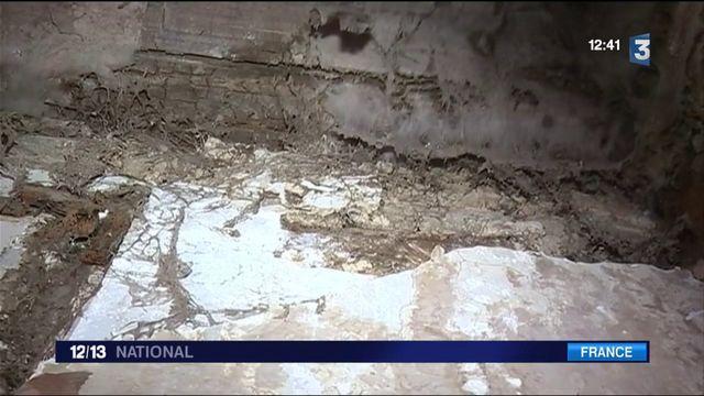 Champignons : en Bretagne, la mérule ravage les bâtiments