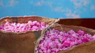 Inde : à la découverte de Kannauj, l'autre capitale du parfum (France 2)