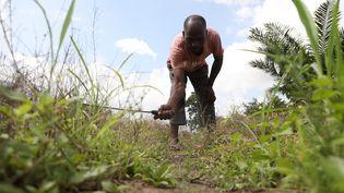 Un agriculteur dans l'Etat de Nasarawa au Nigeria, le 11 août 2021. (KOLA SULAIMON / AFP)